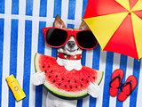 dog  realxing at the beach