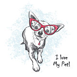 Funny smooth-haired chihuahua wearing glasses