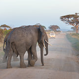 Family of elephants on dirt roadi in Amboseli