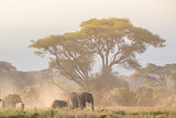Elephants in front of Kilimanjaro, Amboseli, Kenya