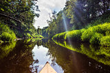 The forest river in the sun light, Luchosa, Belarus.