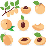 Apricot. Set apricots, pieces and slices