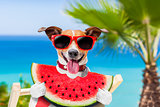 dog on hammock and watermelon