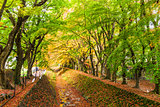 Maple Tunnel in Japan