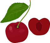 Ripe red cherry berries with leaves. Vector