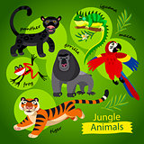 cute wild animals of Jungle.
