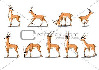 Antelope Gazelle  Image Isolated on White Background