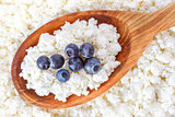crumbly cottage cheese in the wooden spoon with blueberries
