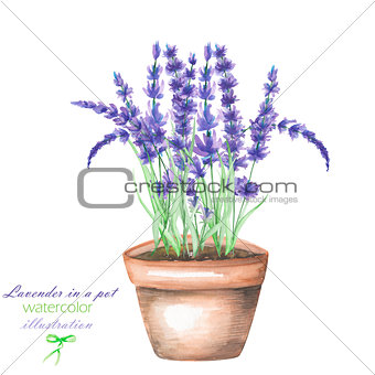 An illustration with a watercolor lavender flowers in a pot