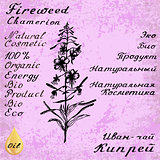 Cyprus angustifolia, Willow herb, Chamerion angustifolium, fireweed botanical illustration