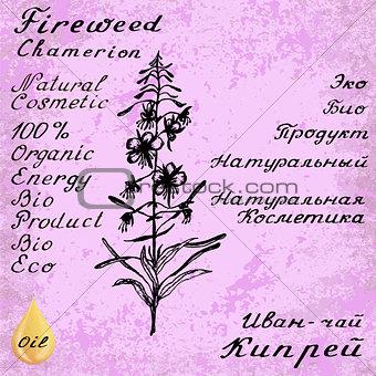 Cyprus angustifolia, Willow herb, Chamerion angustifolium, fireweed botanical illustration