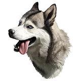 realistic husky portrait