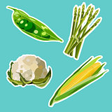 Vector set of flat cartoon vegetables stickers.