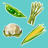 Vector set of flat cartoon vegetables stickers.