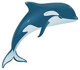 Orcinus orca marine mammal
