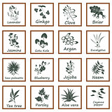 Collection of Ayurvedic Herbs