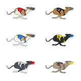 Set of running dog Whippet breed