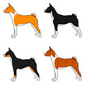 Vector set of dogs basenji breed , all colors