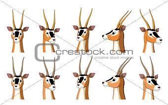 African Antelope Gazelle Isolated on White Background