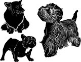 dog collection. Cardigan Welsh Corgi. Welsh Corgi. Silhouette of a dog. Dog Bulldog. The dog breed bulldog.West Highland White Terrier