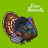 Isolated sketc farm turkey on a background