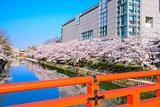 Kyoto, Japan Spring