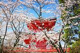 Kyoto Japan in Spring