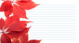 Red virginia creeper leaves and notebook paper