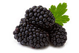 Blackberry with leaf.