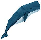 Sperm whale marine mammal