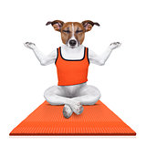 personal yoga trainer dog