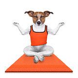 personal yoga trainer dog