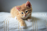 red kitten on a beige blanket