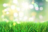 3D green grass