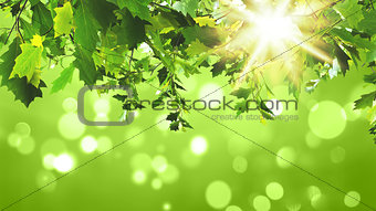 3D green leaves on green background