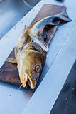 Big nowegian fish on cutting board