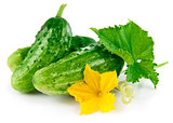 Fresh green cucumber with leaf and flower