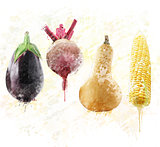 Fresh vegetables watercolor