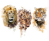Lion ,Leopard and Tiger watercolor
