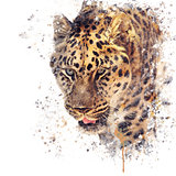 Portrait of Leopard watercolor