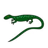 green doodle lizard