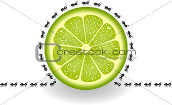 Ants around lime slice