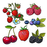 Strawberry blueberry blackberry cherry raspberry isolated vector illustration