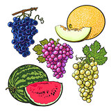 Collection of red, green, purple grapes, melon and watermelon