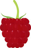 Ripe raspberry icon