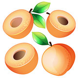 Composition of Apricot on white background. Apricot icon, fruit set. Juicy Apricot, Apricot Slice. Fruit Composition for Packaging Juice, Yogurt and other design.fruits apricot with leaves and slices