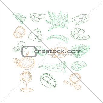 Avocado, Aloe And Coconut From Different Angles Hand Drawn Artistic Sketch