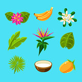 Tropical Plants And Fruits Collection
