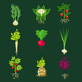 Fresh Vegetable Plants With Roots Collection