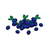 Hand drawn blueberries closeup.